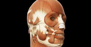 Tvárové cvičenie - štruktúra svalov
